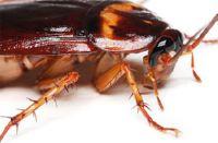уничтожeние тараканов в квартире