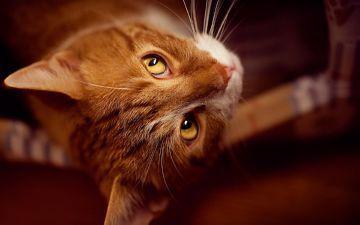 заговор от блох с котом